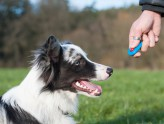 Dog Training Resources